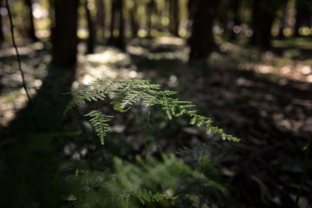 aquelarre escuela de fotografía, paisaje y naturaleza, marcelo gonzalez calero